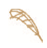 feathericon